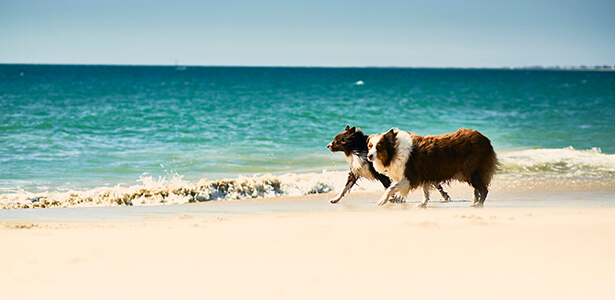 Mandurah Village pets at the beach